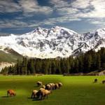 Fairy Meadows vor dem Nanga Parbat
