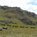Nomaden auf dem Trek - Deosai-Plateau