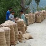 Abtransport der Kartoffelernte - Hunza