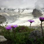 Blumen und Eis