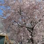 Frühling in Hunza