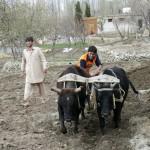 Feldarbeit in Hunza
