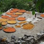 Aprikosen beim Trocknen - Hunza