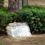 Von Bundeskanzler Kohl 1984 gepflanzter Baum - Islamabad A