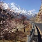 Der das Hunza-Tal überragende Rakaposhi (7.788 m)