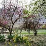 Erste Frühlingsblüten