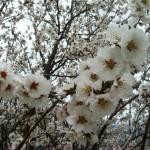 Volle Blütenpracht