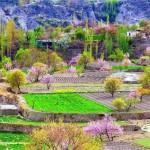 Terrassenfelder im Frühling