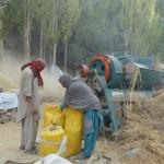 Getreideernte im Hushe-Tal